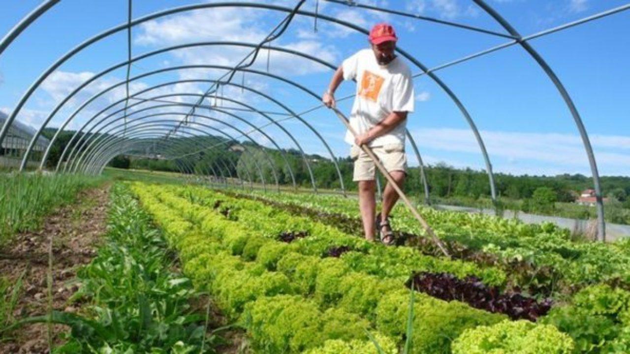 Possibilities Of Improving Organic Farming In Turkey